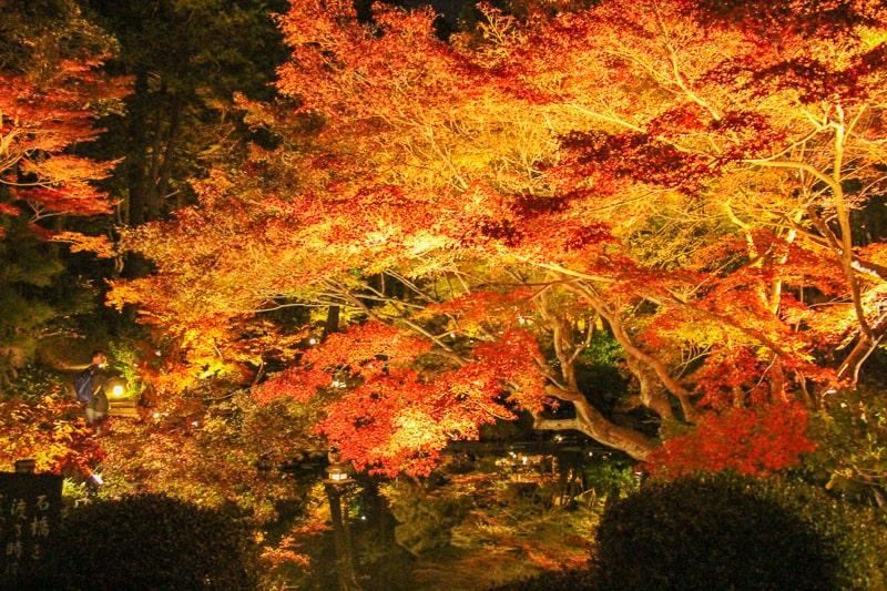 金戒光明寺のライトアップ 紅葉